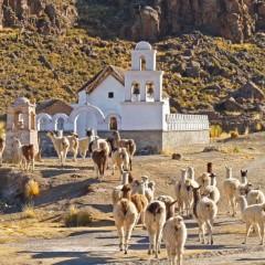 La Vuelta del Altiplano